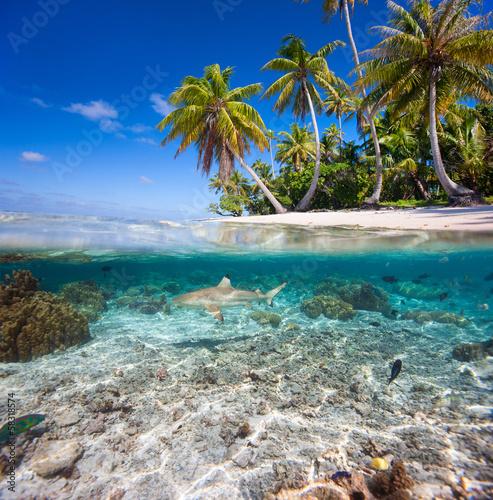 tropikalna-wyspa-pod-i-nad-woda