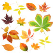 Collection of beautiful colored autumn leaves isolated on white