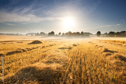 Leinwand Poster stubble field at sunrise