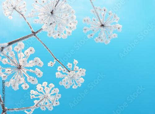 Fotografie, Obraz  Frozen flower