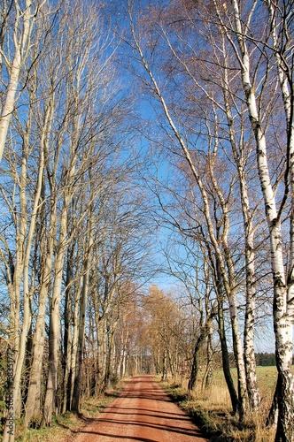 Weg unter kahlen Bäumen bei Herbstsonne © alisseja