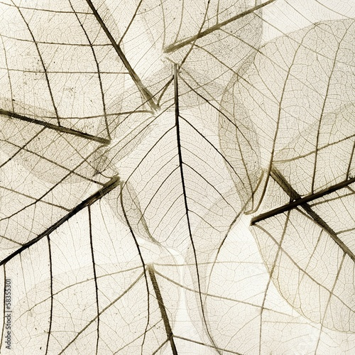 Photo sur Toile Les Textures background from transparent dried fall leaves
