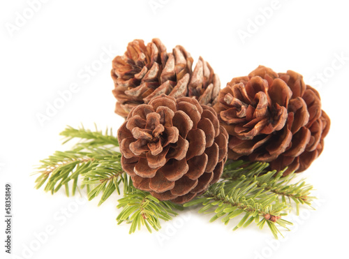 Fotografie, Obraz  Pine cones close up