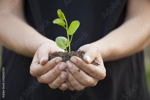Poster Vegetal Hands holding seedleng