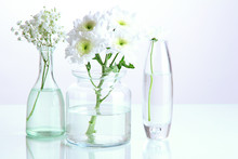 Plants In Various Glass Containers Isolated On White