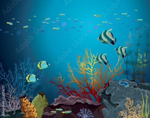 Rafa koralowa i podwodne stworzenia.