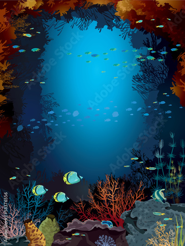 Coral reef and school of fish.