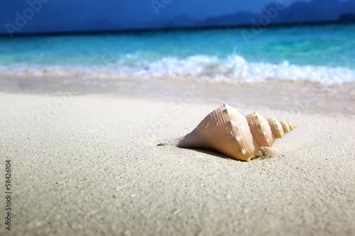 Wall mural - seashell on the beach (shallow DOF)