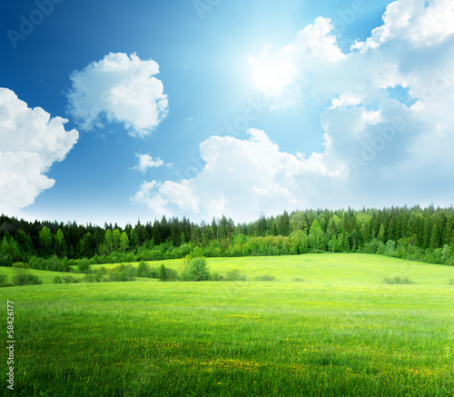 Poster Blauw field of grass and perfect sky