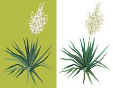Flowering Plant Yucca