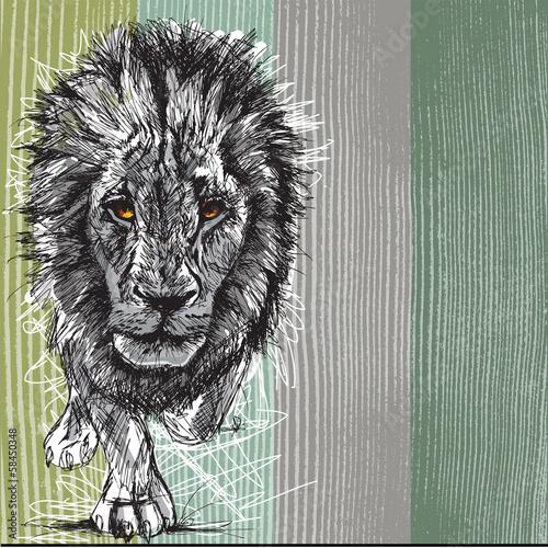 szkic-wielkiego-meskiego-lwa-afrykanskiego