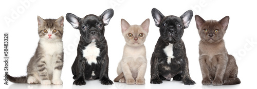 Group Of Puppies And Kittens Buy This Stock Photo And Explore