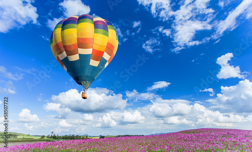 Colorful hot air balloon over pink flower fields Canvas Print