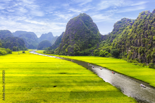 Photo Stands Yellow Rice field and river, NinhBinh, vietnam landscapes