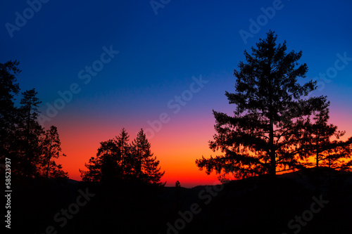 Poster de jardin Parc Naturel Sunset in Yosemite National Park with tree silhouettes
