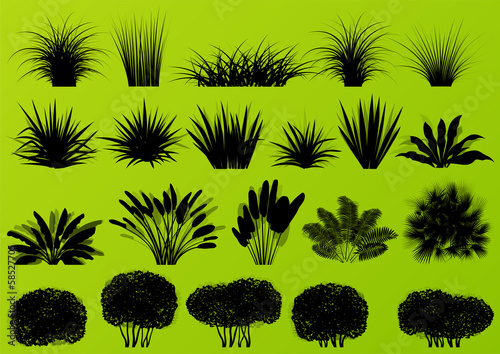 Wallpaper Mural Exotic jungle bushes grass, reed, palm tree wild plants collecti