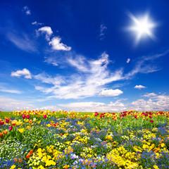 fototapeta łąka pięknych kwiatów i niebieskiego nieba