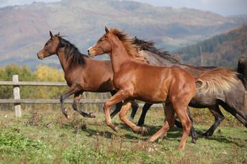 Group of horses running on autumn pasturage