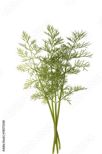 Tuinposter Olijfboom Dill, Anethum graveolens, Dillblaettchen,