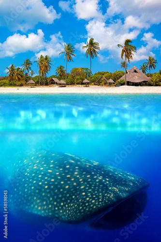 Tuinposter Koraalriffen Whale shark below