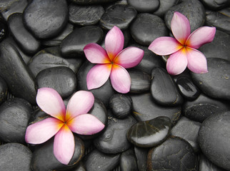 Panel Szklany Do Spa Three frangipani flowers on black pebbles