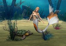 Mermaid Und Turtle