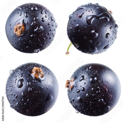 Photo Black currant with drops on white
