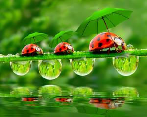Panel Szklany Eko Little ladybugs with umbrella.