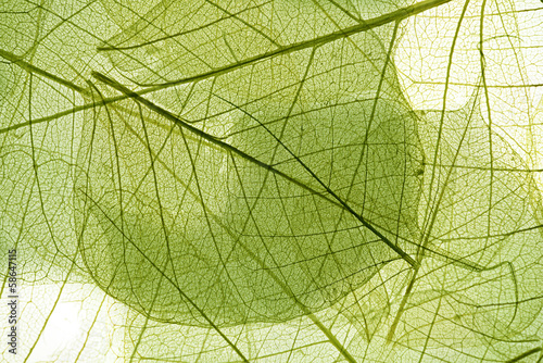 leaves background #58647115