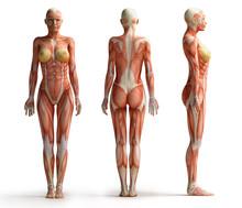 Female Anatomy View