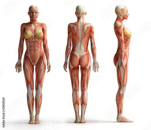 widok-kobiecej-anatomii