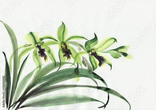 Fototapety, obrazy: Green orchids
