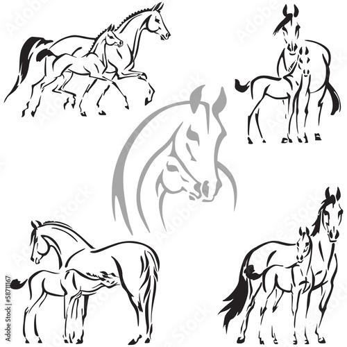 Fotografie, Obraz  mares and foals 1