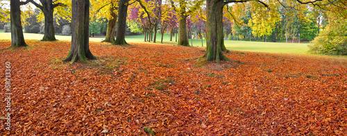 In de dag Rood traf. Autumn Landscape.