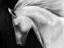 Digital Art Oil Painting - Whi...