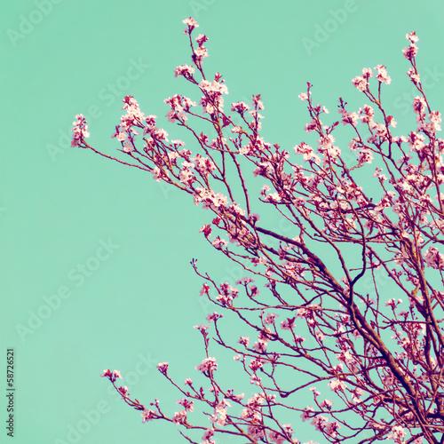 Retro Cherry Blossom