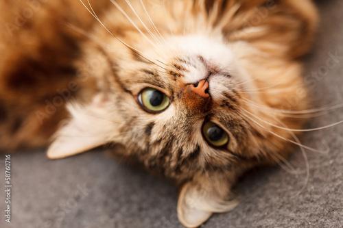 Keuken foto achterwand Kat nice cat