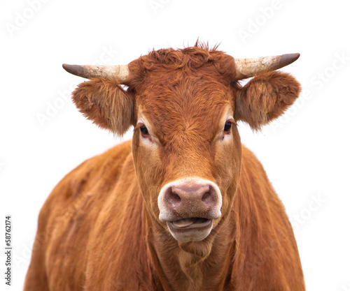Foto op Plexiglas Koe Portrait of a Cow