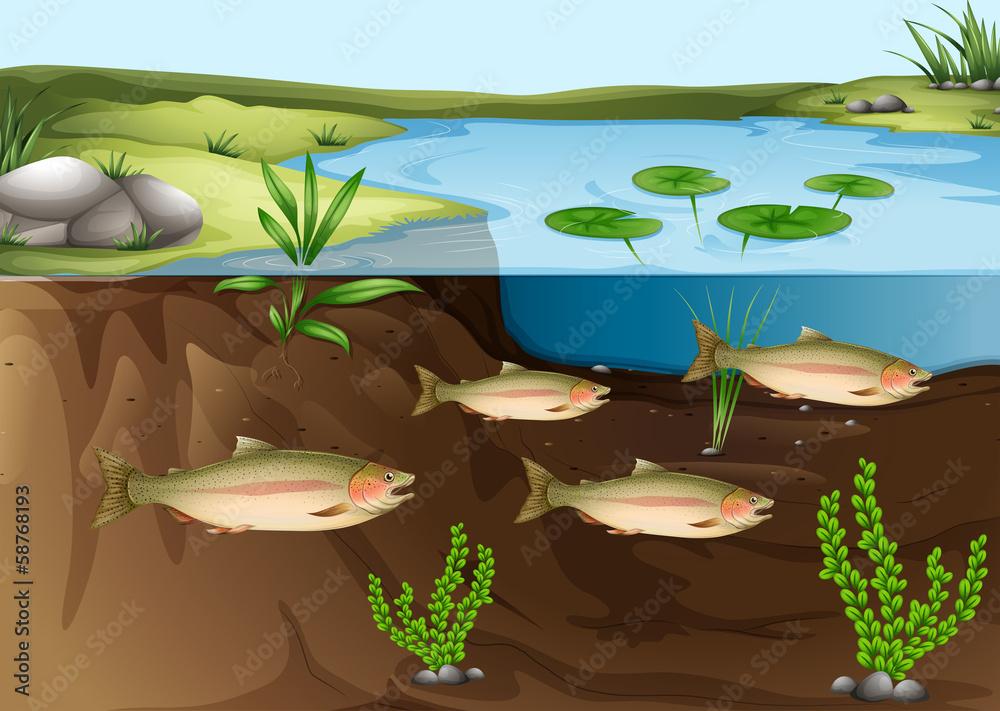 Fototapeta An ecosystem under the pond