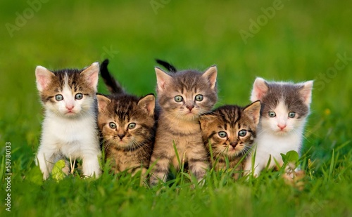 Group of five little kittens sitting on the grass #58780133