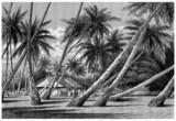 Pacific Islands : Landscape - 58784906