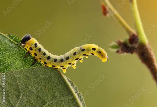 Fotografía  Caterpillar.