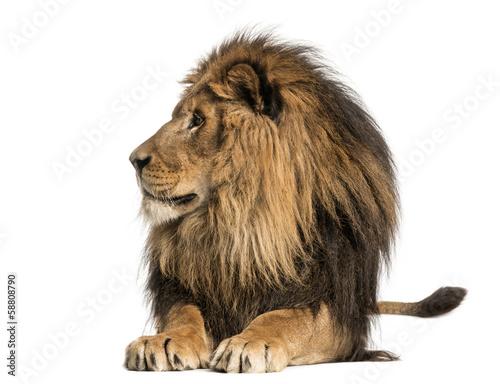 Foto op Plexiglas Leeuw Lion lying, looking away, Panthera Leo, 10 years old, isolated