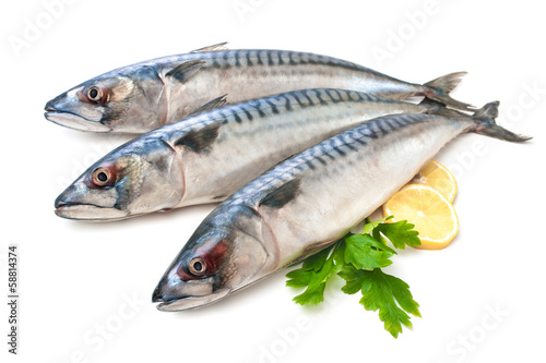Fotobehang Vis Mackerel Fish