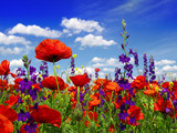 Summer wildflowers and clouds - 58819180