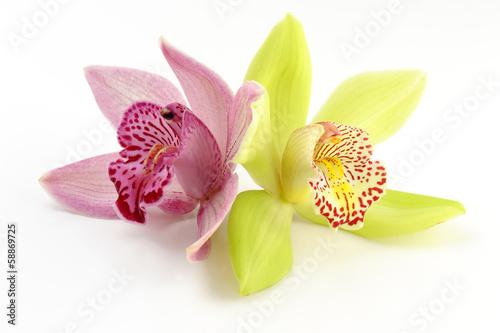 Dendrobium - 58869725