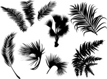 Palm And Fern Leaves Silhouettes Isolated On White