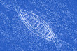 DNA molecules of stars