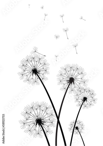 black and white dandelions vector #58923753