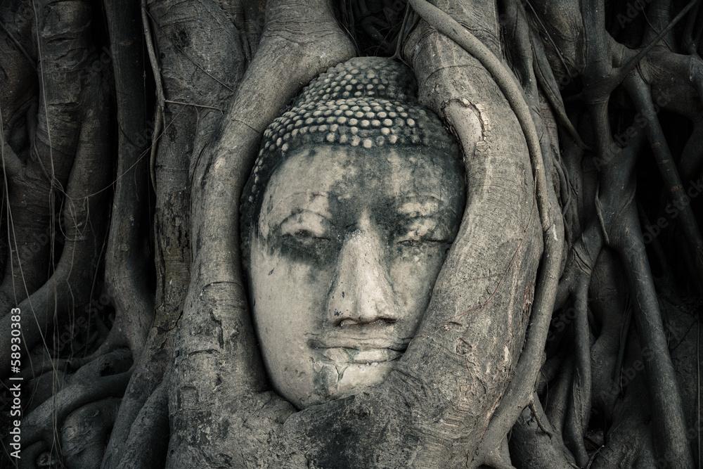 Fototapety, obrazy: Tête de bouddha. Ayutthaya, Thaïlande